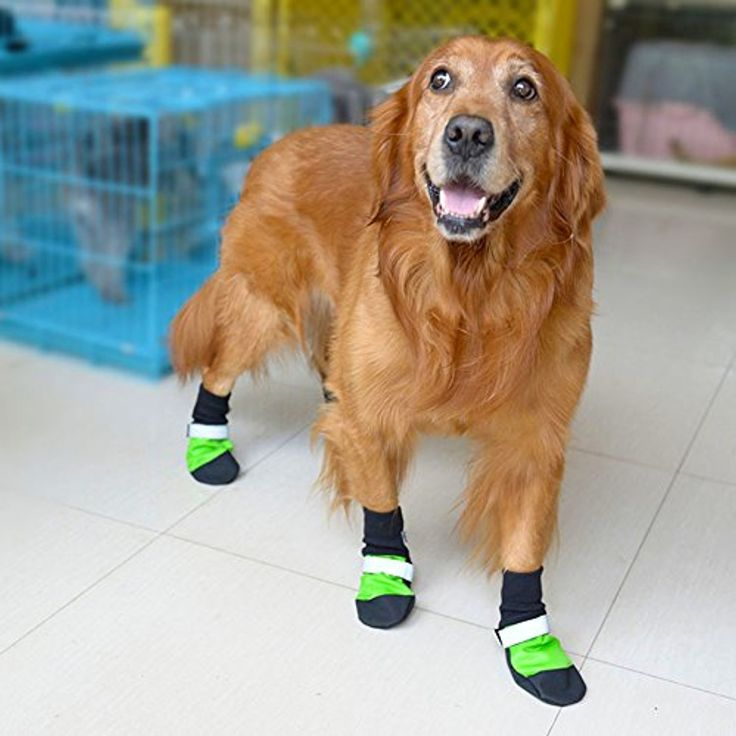 68 besten Pet care Bilder auf Pinterest | Haustiere, Haustierpflege ...