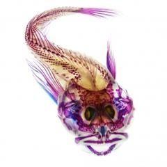 透明骨格標本 - NAVER まとめ