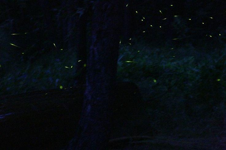 Fireflies #2 Photo - Visual Hunt