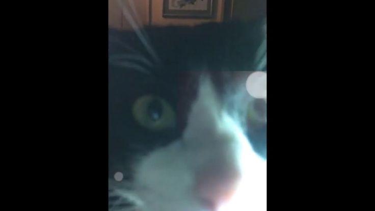 Curious Kat