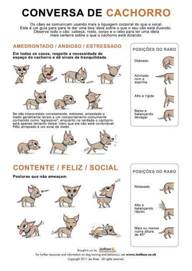Conversa de Cachorro - Os cães se comunicam usando mais a linguagem corporal que a vocal.