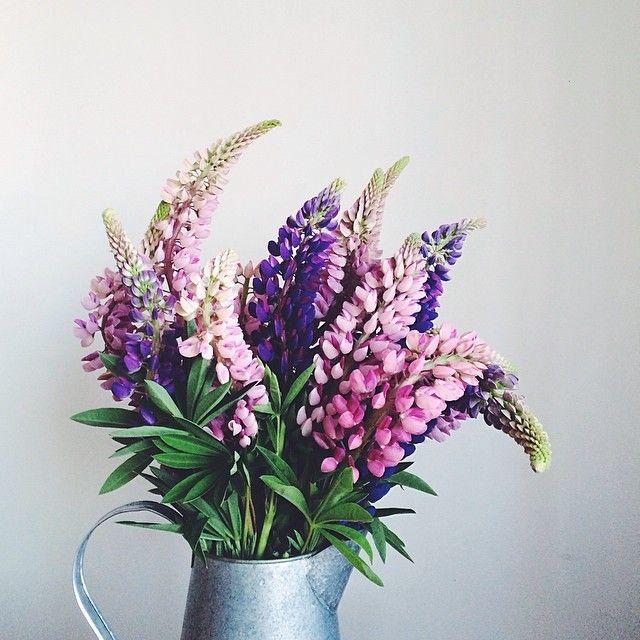 Lubiini on kaunis luonnossa kasvava kukka.