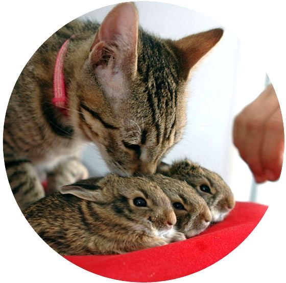 {tabby kitten kisses rescue bunnies}: Awesome Animal, Kiss, Kitty Cats, Pet, Baby Bunnies, Finding Neverland, Kittens, So Sweet, Love Things