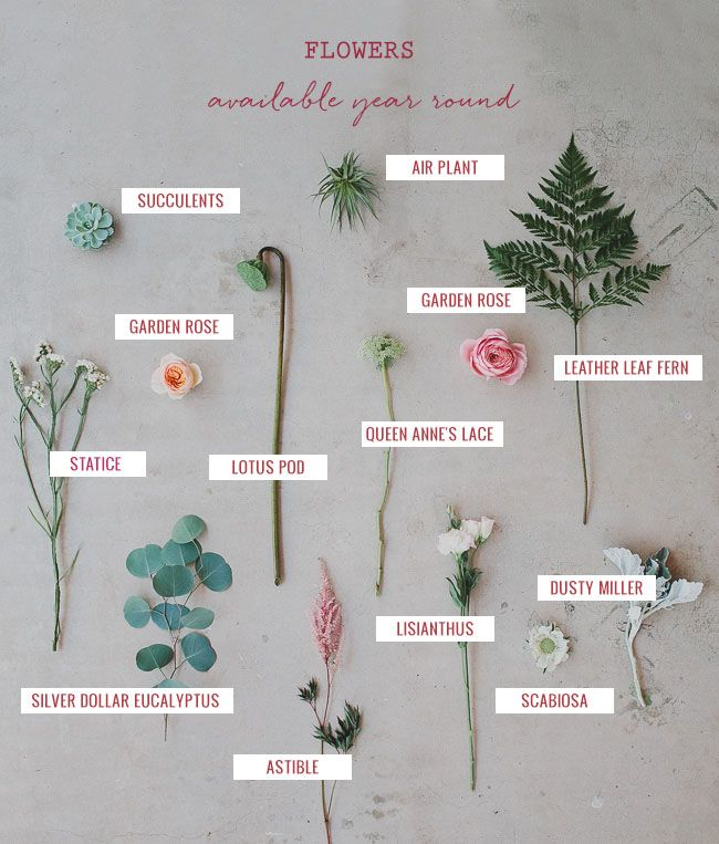 Green Wedding Shoes flower guide: pretty flowers that are available year round!