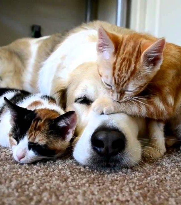 Ces 17 Adorables Felins Vont Vous Donner Envie D Adopter Un Chat Roux Comme Chien Et Chat Chat Roux Et Chien Chat