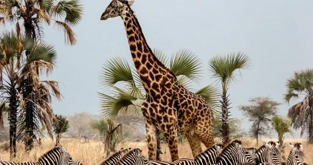 Voyage Tanzanie sur mesure, sejour Tanzanie a la carte - Voyageurs du Monde