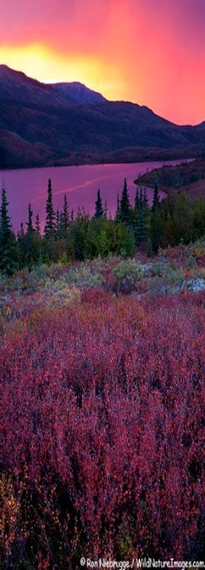 Denali National Park, Alaska.