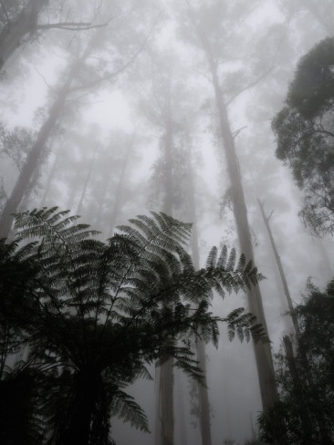 Dandenong Ranges in winter