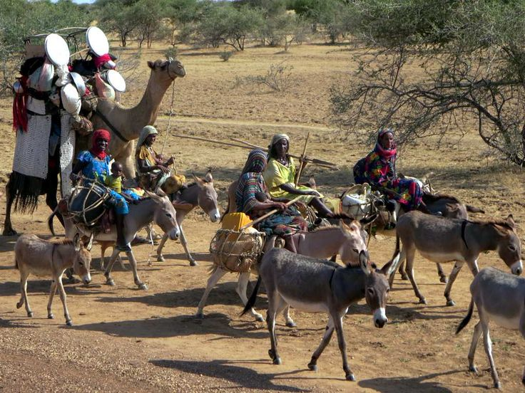 At the beginning of the dry season in Central Africa, nomadic clans move southward in search of greener pastures. This group was seen between Oum Hadjer and Mangalmé, Chad.