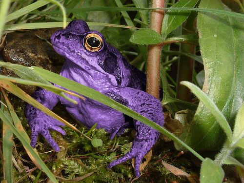 Purple Tree Frog this frog was ment for me