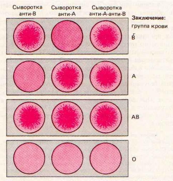 Анализ на определение группы крови