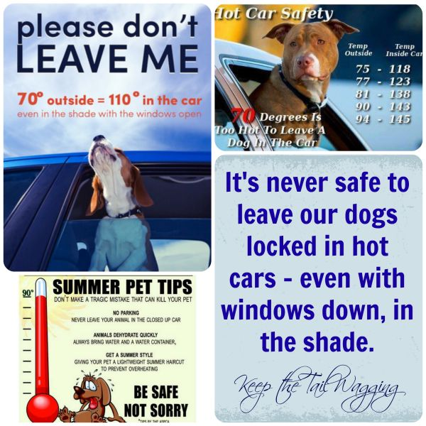 Leaving dogs in cars... cruel/abuse or not in this case?