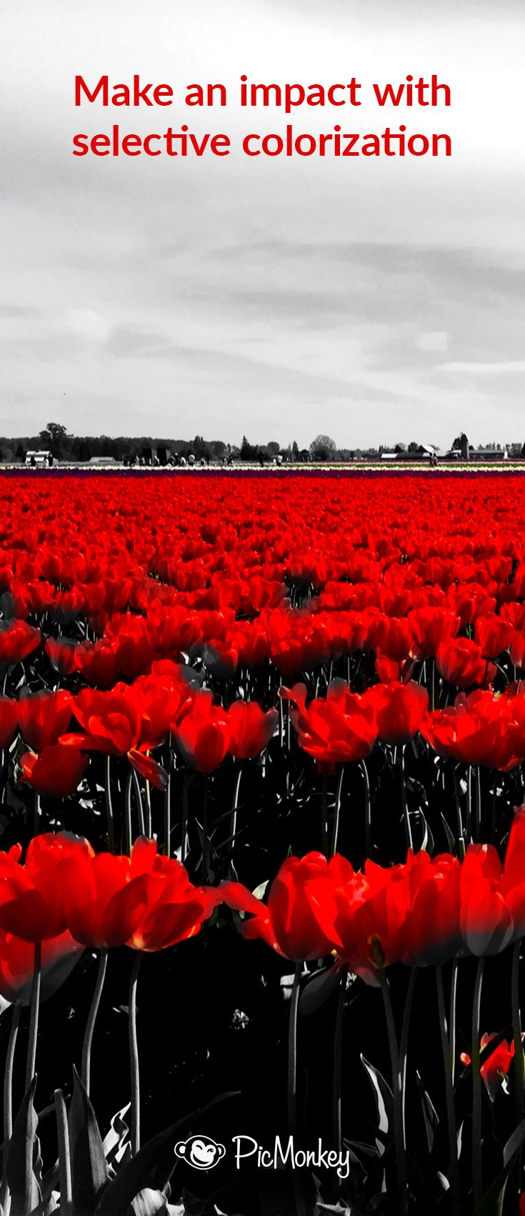 Free online photo editor selective coloring - Black White With A Pop Of Color Is One Of The Best Effects Learn