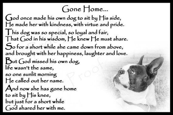 Boston Terrier Dog Pet Loss Memorial Bereavement Fridge Magnet Etsy Losing A Dog Quotes Boston Terrier Dog Boston Terrier