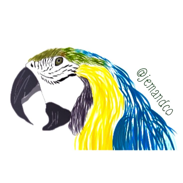 Bird parrot art love it
