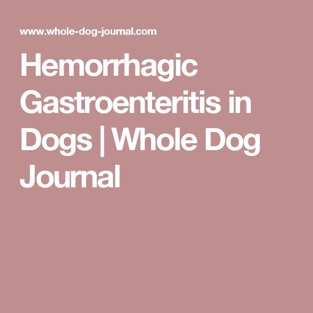 Hemorrhagic Gastroenteritis in Dogs | Whole Dog Journal