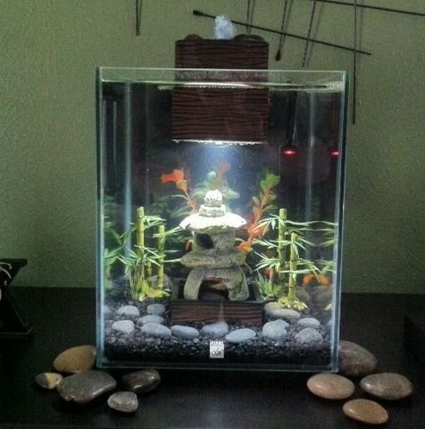 Fluval chi tank page 6 pet products pinterest for Fluval chi fish tank