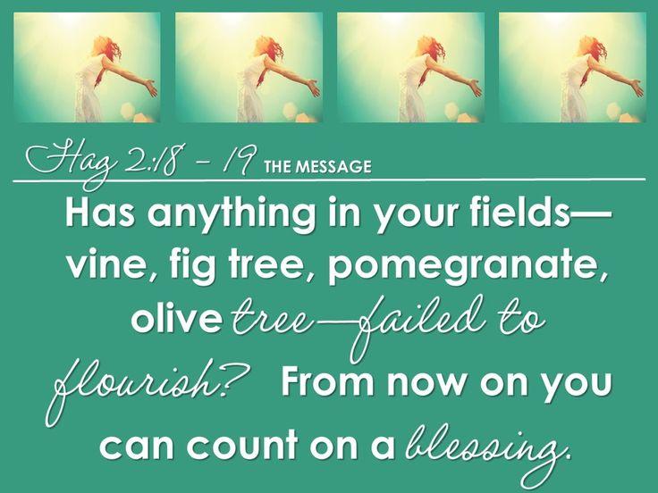 Flourishing Life 4 Haggai 2:18-19