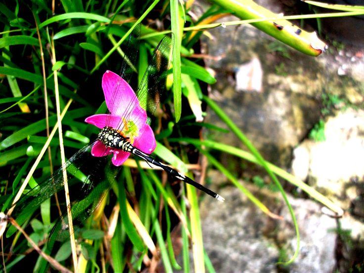 Dragonfly by lisa-adrina.deviantart.com