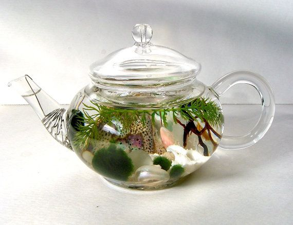 mini glass teapot green tea Marimo moss ball aquarium