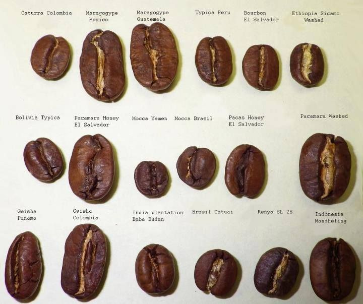 different types of coffee beans from regions around the world...