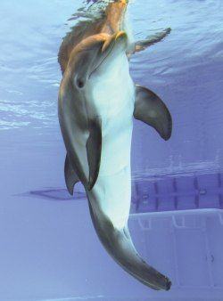 Winter the Dolphin, I got to meet her last week in Clearwater, Florida. Sweetest thing!