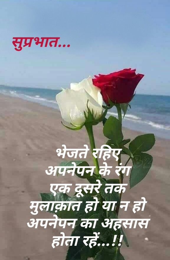 Pin By N R P On Love Good Morning Flowers Sweet Good Morning