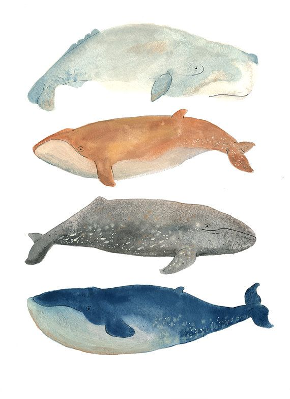 This is the perfect print for any whale lover in your life! This beautiful illustration depicts four of the largest whales around: Sperm, Fin, Grey