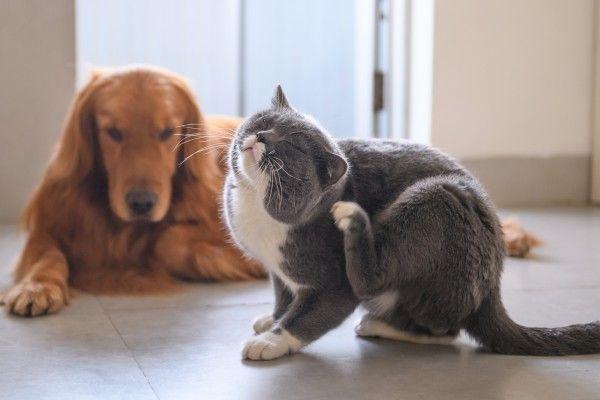Fda Warns Common Tick Flea Meds Are Making Pets Sick Cat Has Fleas Pets Cat Allergies