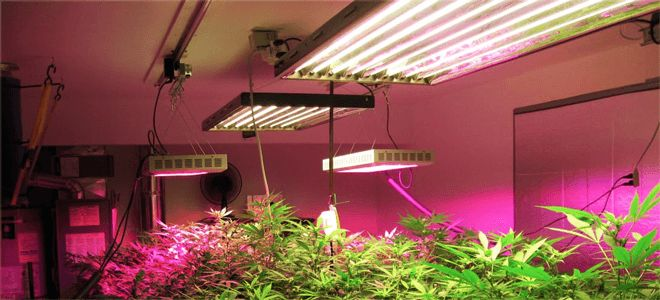 The Flowering Light Cycle is the cycle you set your High Pressure Sodium Lights on to bud your marijuana plants. There is a basic light cycle and a more ex