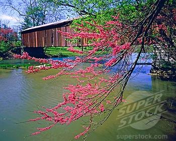 Redbud tree covered bridge Cataract Falls State Park Indiana (1912-32
