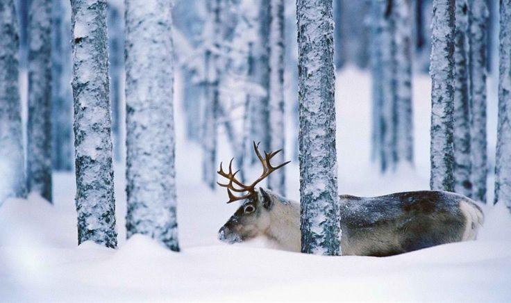 Mens Cotton Pocket Square - snow sleigh deer blue by VIDA VIDA Ihtpl