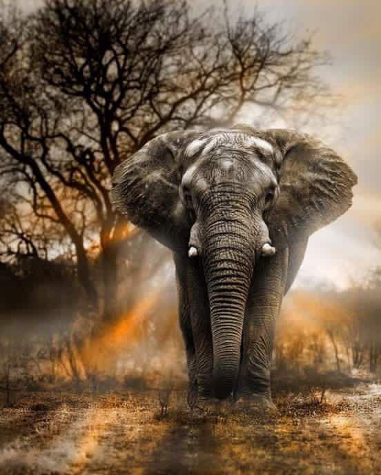 「インド象」