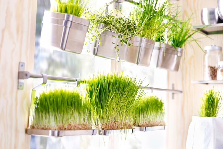 """""""Stainless steel IKEA rails fixed across a window with containers holding wheatgrass.""""  Could be good if you have a window that features a lot of sun but a view that you wouldn't miss."""