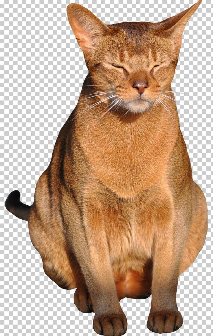Cats Png Cats Molduras