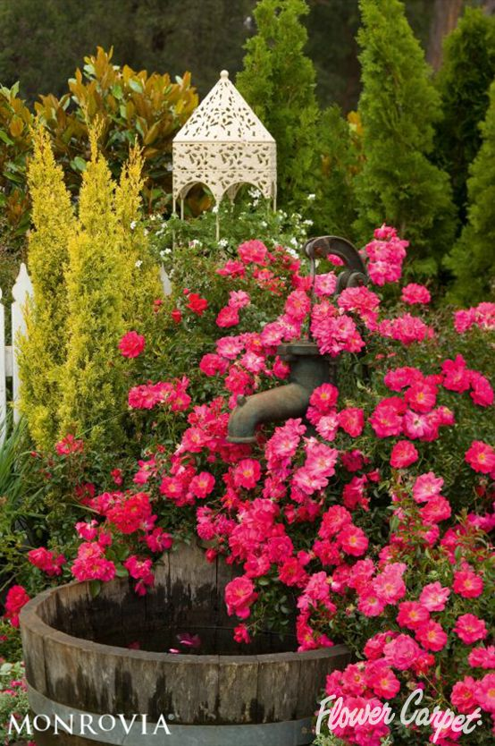 Roses In Garden: 65 Best Garden Designs With Roses Images On Pinterest