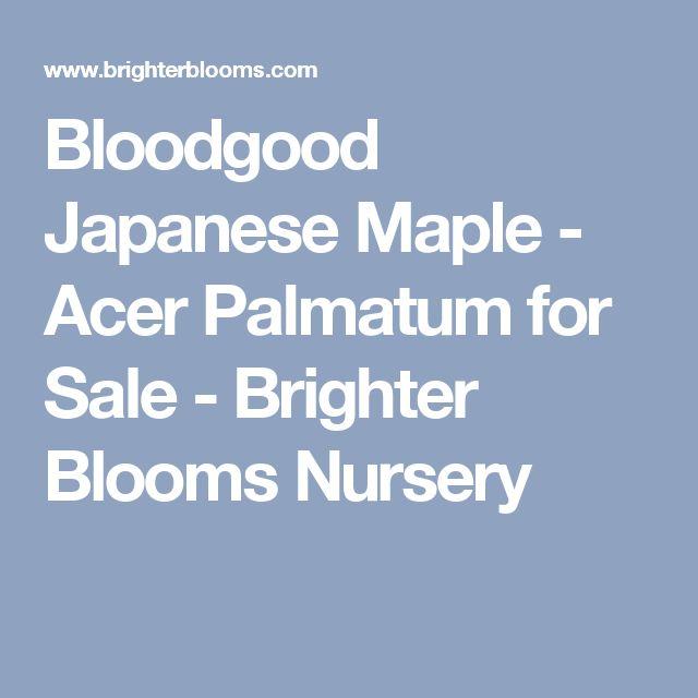 Bloodgood Japanese Maple - Acer Palmatum for Sale - Brighter Blooms Nursery