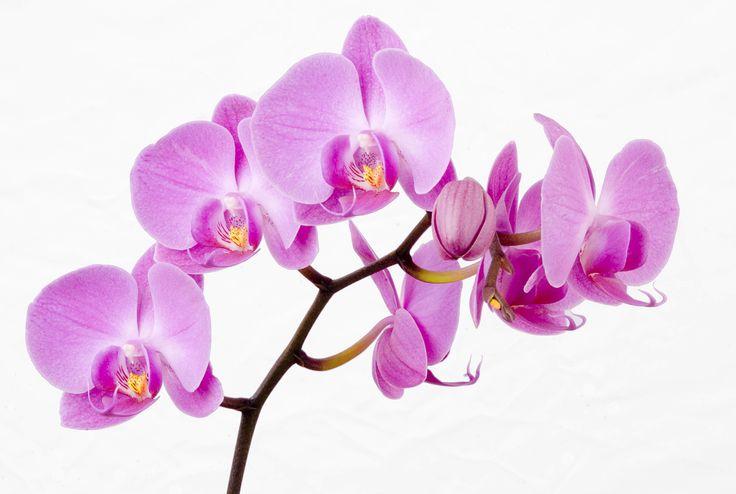 Wenham Waite - free desktop pictures orchid - 4017 x 2700 px