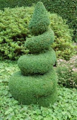 Types Of Boxwood Shrubs | Boxwood Shrubs, Planting, Care Of Boxwood Plants, Boxwood Varieties