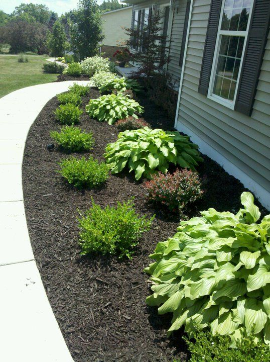 Mulch and bushes like this. I'd do hosta, grass, hosta, grass, with flowers possibly in front. or do rose bushes or hydrangeas in back and do the hostas and grass towards the front
