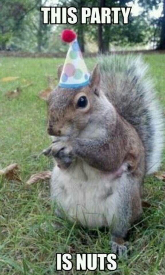 Totally nuts... | Funny | Pinterest