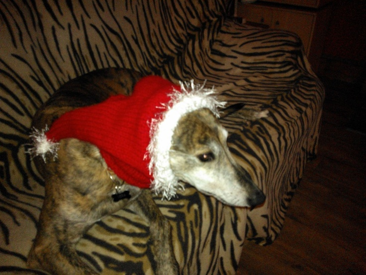 23 best images about greyhound snoods on Pinterest