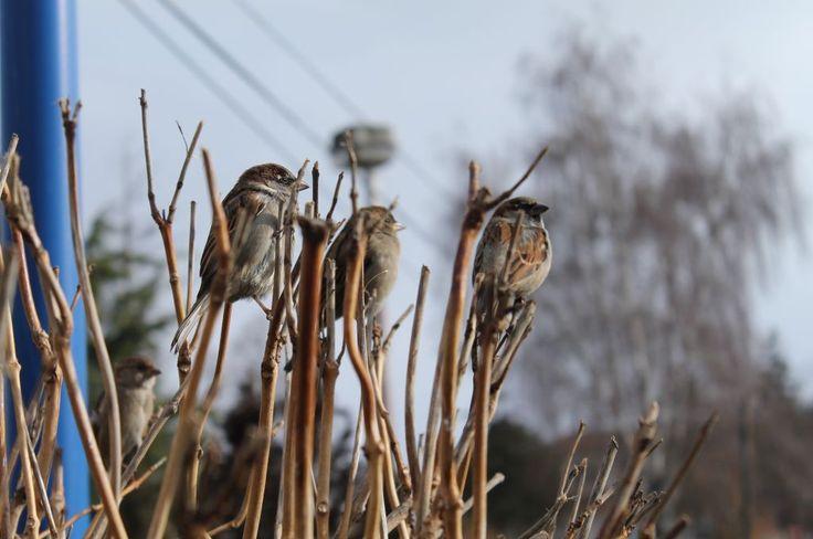 a Birds company