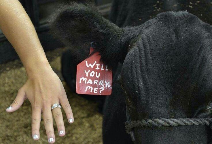 I hope the guy I marry proposes like this!!!! Ashlyn he will need to borrow one of your cows lol @Ashlyn Gilbert Nell