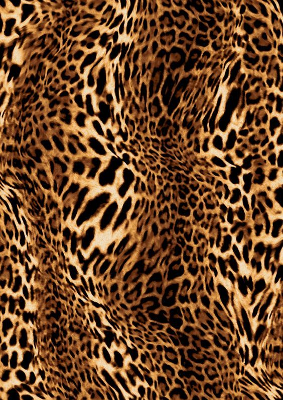 Best 25 Leopard Print Background Ideas On Pinterest