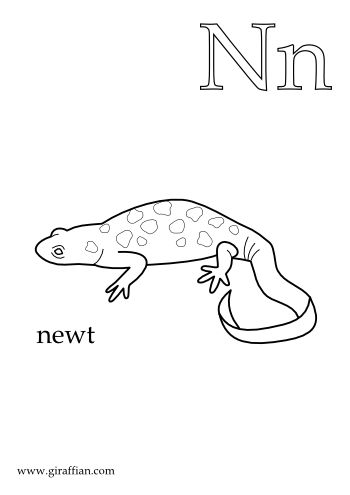 n is for newt animal letterscoloring pageshomeschoolingalphabetpreschool