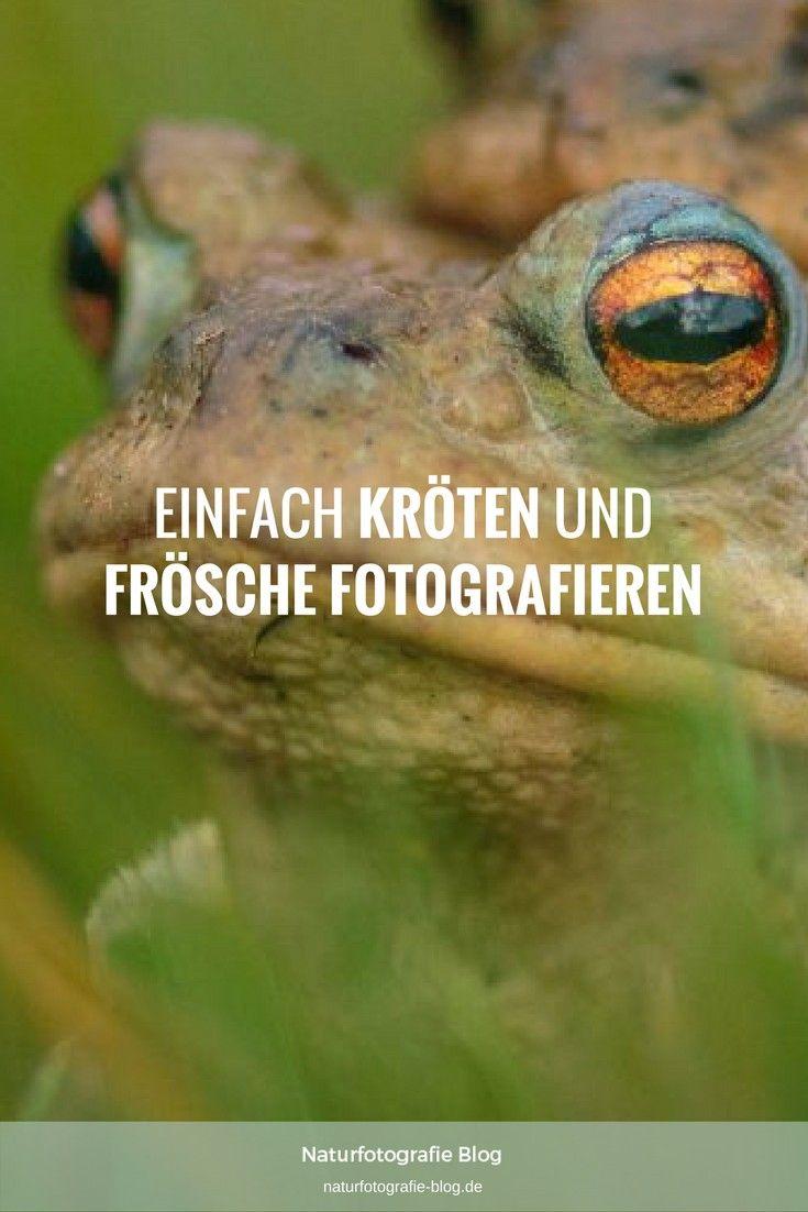Kröten und Frösche fotografieren: In Paarungsstimmung zeigen die Lurche tolle Farben und lassen sich einfach von Dir ablichten.  #Naturfotografie #Kröten #Frösche #Fotografieren #Makrofotgrafie #Tierfotografie