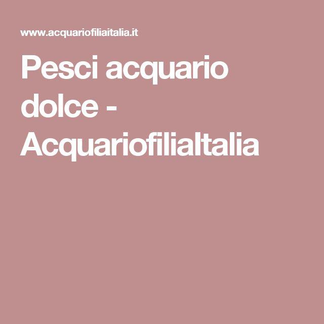 Pesci acquario dolce - AcquariofiliaItalia