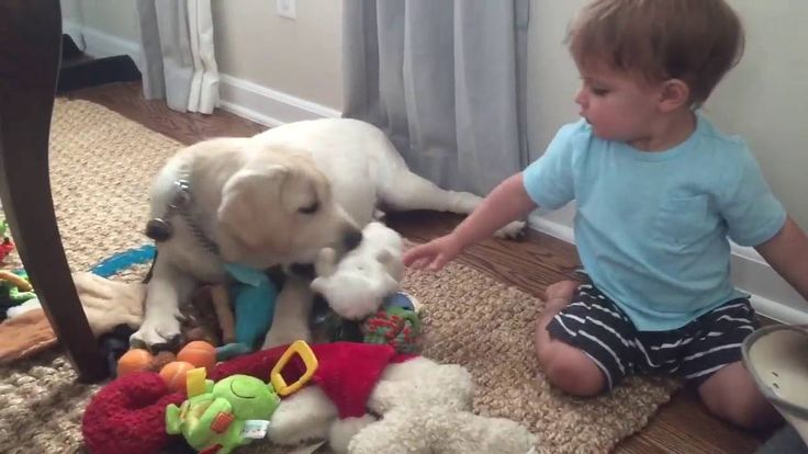 Puppies & toddlers unite!  https://www.petinsurancequotes.com/petinsurance/puppy-insurance.html
