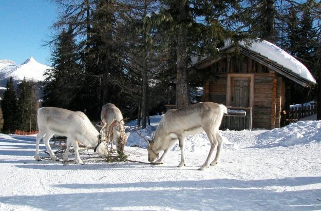 Visit Alta Pusteria in theDolomites (Italy)!